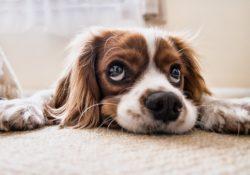 Pojištění domácích mazlíčků. Co všechno zahrnuje?